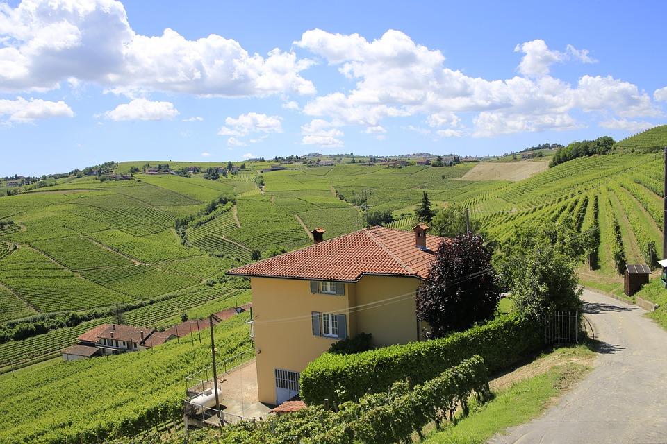 Italy, Piedmont, Vineyard, Landscape