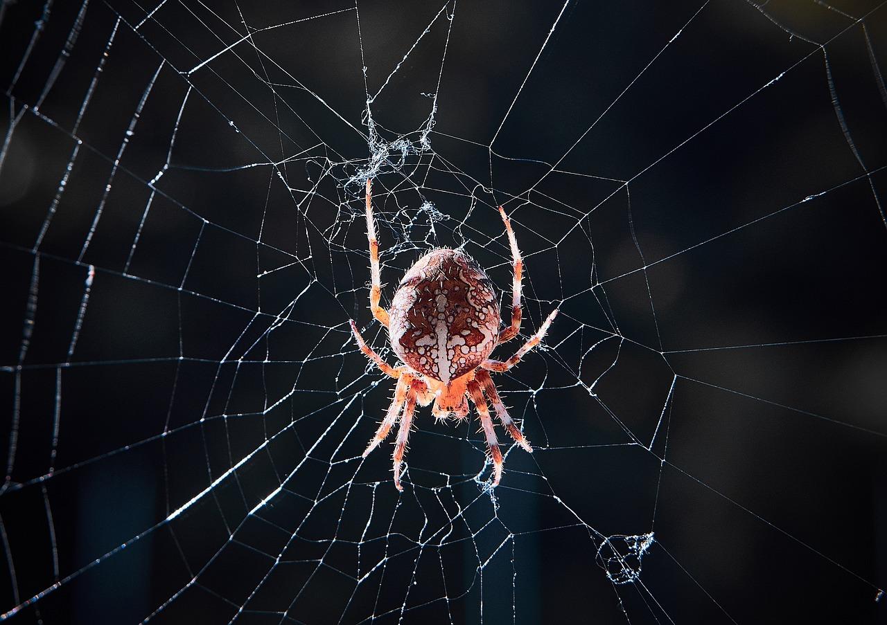 паук большой на паутине фото услугам