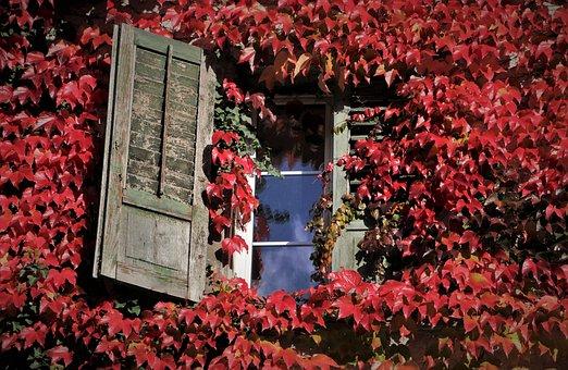 Foliage, Old Windows, Autumn, Pane