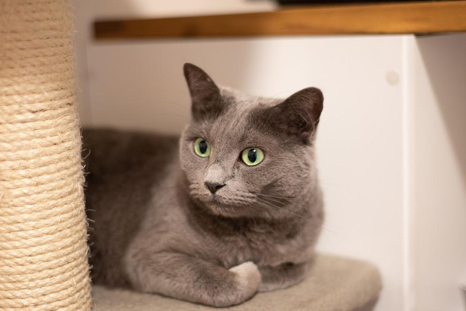Cat, Animal, Recreation, Pet, Cute, Love, Kitten, Cats