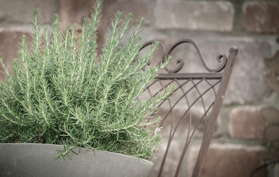 Rosemary, Herb, Herbs, Ingredient, Fresh, Spice, Green