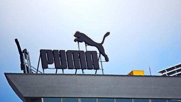 100+ kostenlose Mountain Lion und Puma Bilder Pixabay