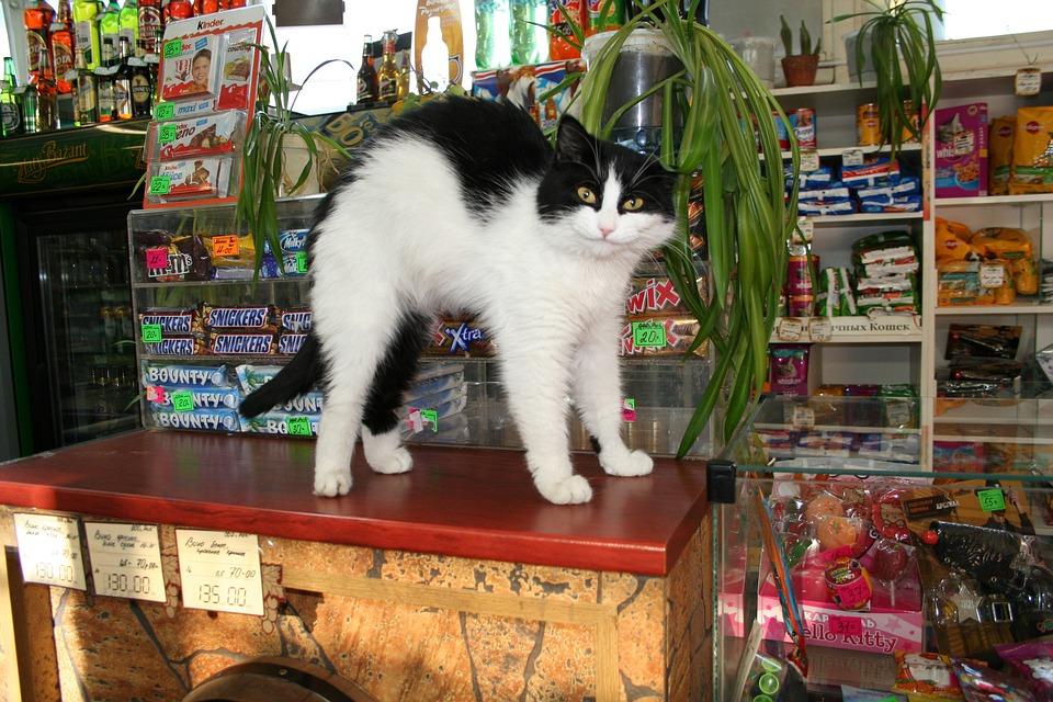猫, おはようございます, アップグレード, カウンター, ユーモア, 笑い, 目覚め, 子猫, 木佐