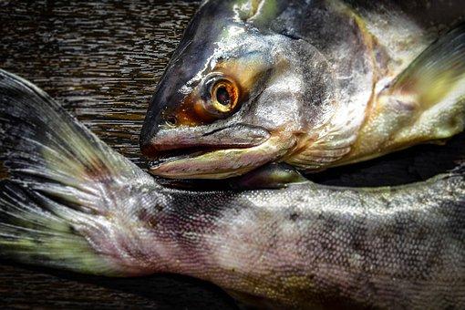 Сингапурский фонд PE построит огромную наземную лососевую ферму в Брунее