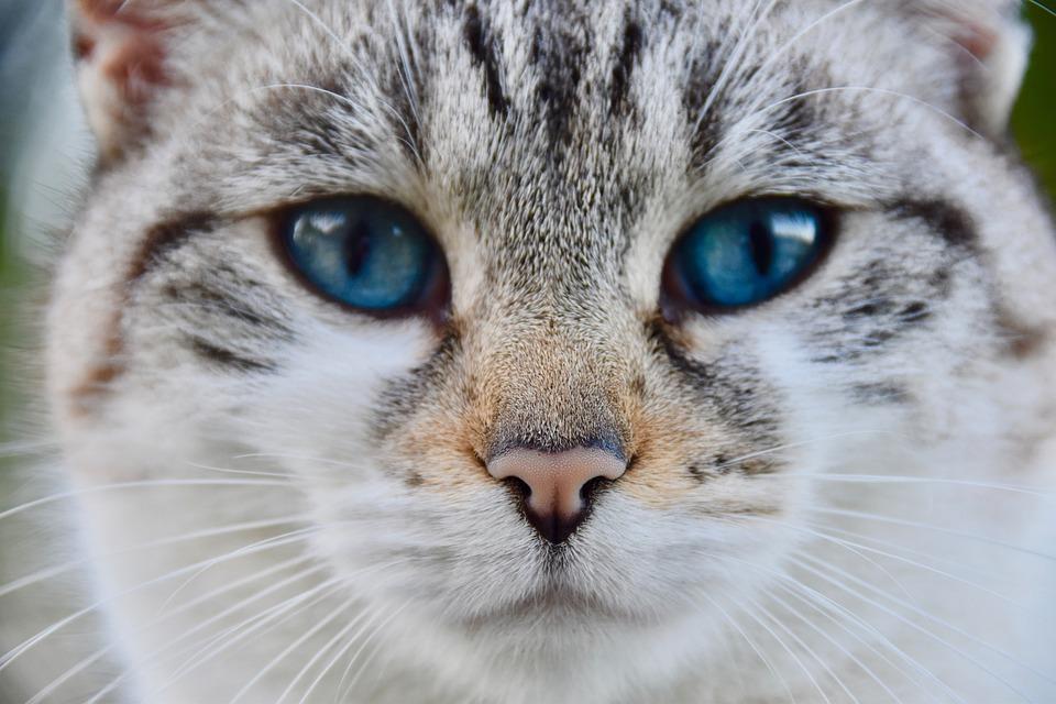 Stáhnout velká kočička videa
