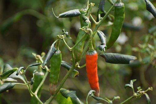 Länger leben mit viel Chili thumbnail