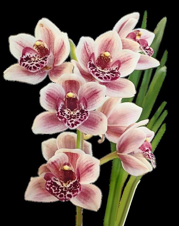 Resultado de imagem para orquideas pixabay