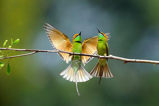 Hello Baby, Sank, Fly, Animal, Nature