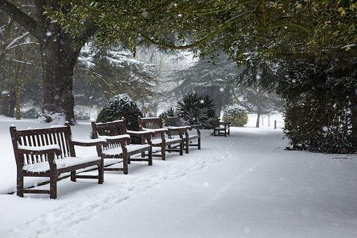 Winter, Snow, Park, Cold, Nature