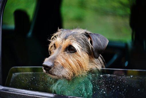 Hond, Huisdier, Portret, Zoogdier, Hoofd