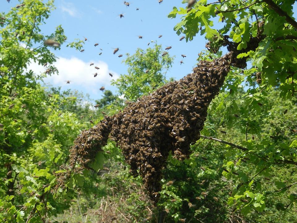 Swarm, Apiary, Beekeeper, Propolis, Honey, Beehive