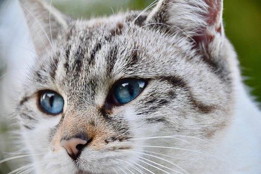 Katze, Straßenkatze, Trüffel-Chat