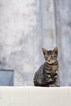 Katze, Abkommen, Tier, Niedlich, Pelz