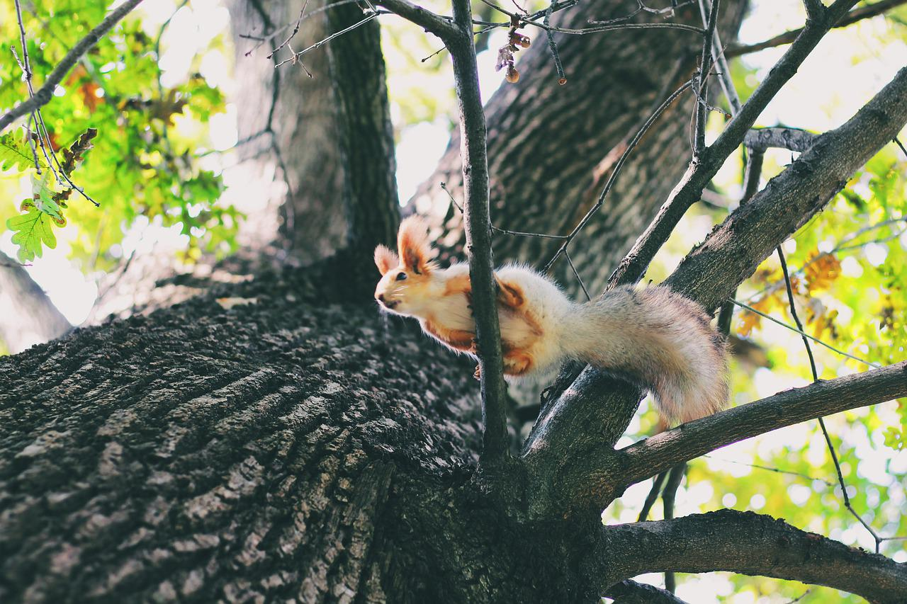 оворят, фото белки на дереве осень каждым