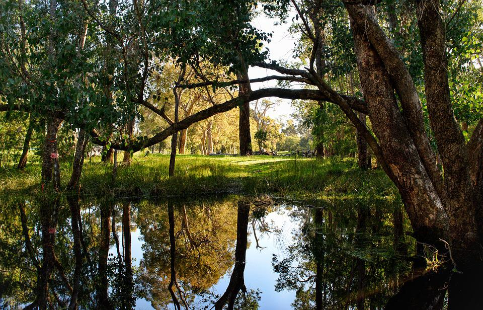 Trees, Landscape, Nature, Reflections, Brook, Forest