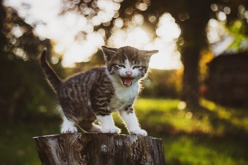10 000 Kitten Pictures Images Hd Pixabay