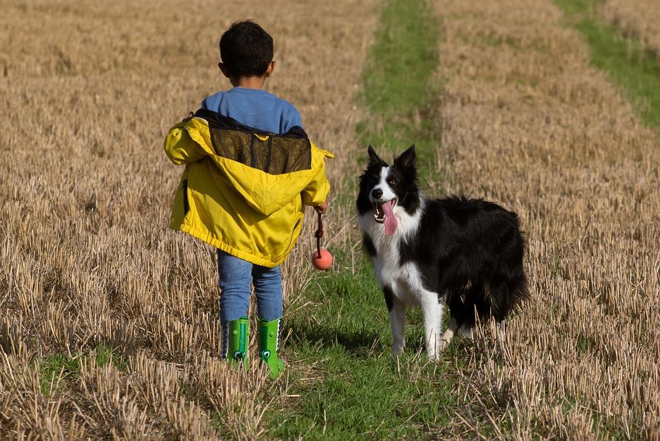 Niño entrenando a su perro en el campo