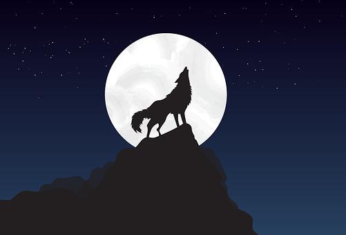 Волк, Стоять, Прогулка, Луна, Ночь