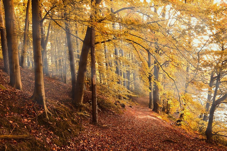 Forêt D'Automne, Herbstlicher Forêt, Forêt