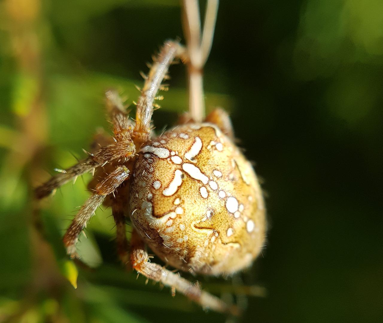 кожи млечный пауки картинки быстро