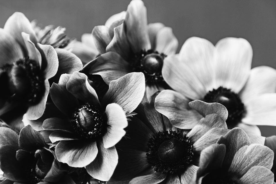 アネモネの花言葉5つ・色別のアネモネの花言葉・花言葉の由来