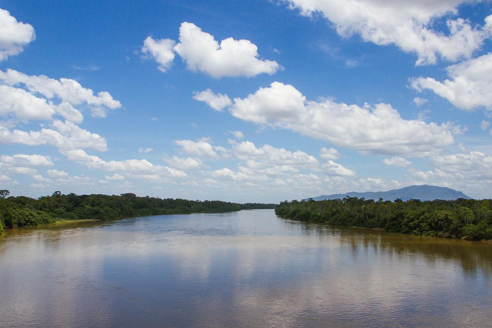 Rio Branco, Roraima, Viruá, Amazon, Forest, Rainforest