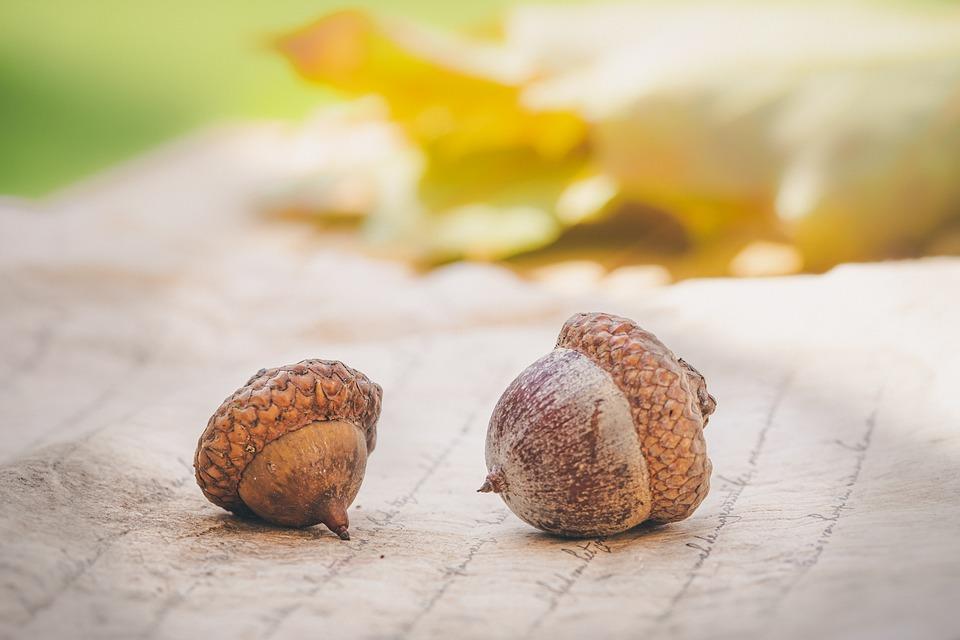 ドングリ, 秋, 葉, ツリー, オーク, 自然, ブラウン, オークの葉, 果物, シート, シーズン