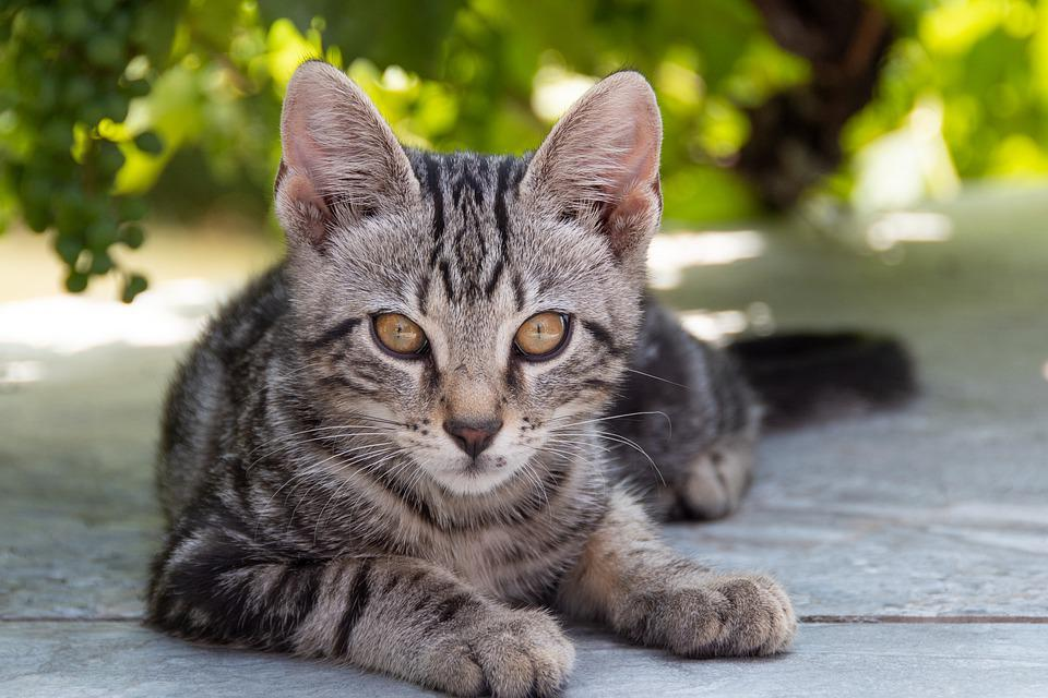 pěkná velká kočička pic