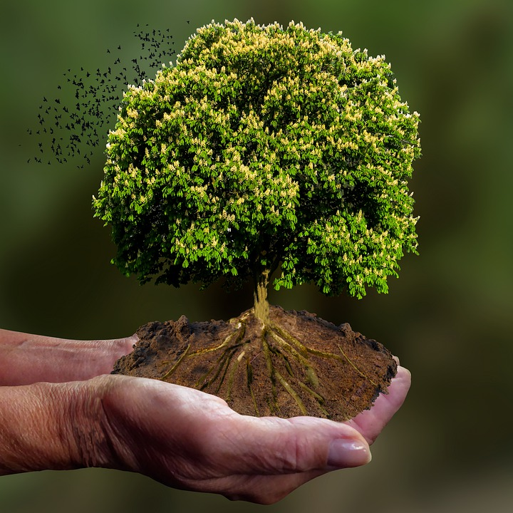 Nature, Tree, Emotions, Hand, Keep, Save, Protect