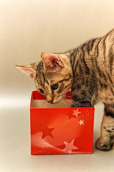 Christmas, Gift, Cardboard, Red, Cat