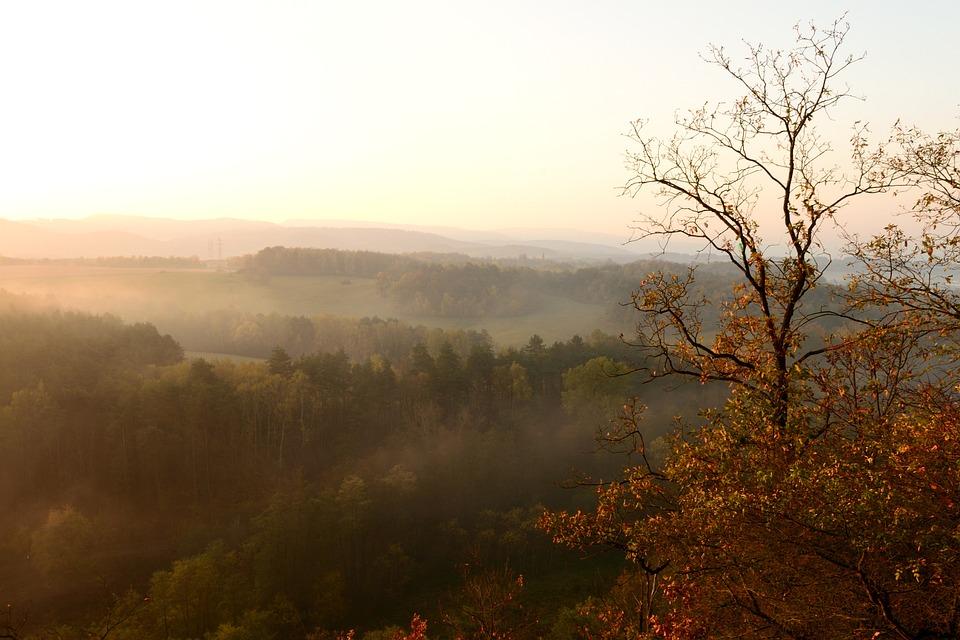 Sunrise, Autumn, Nature, The Fog, Forest, Trees