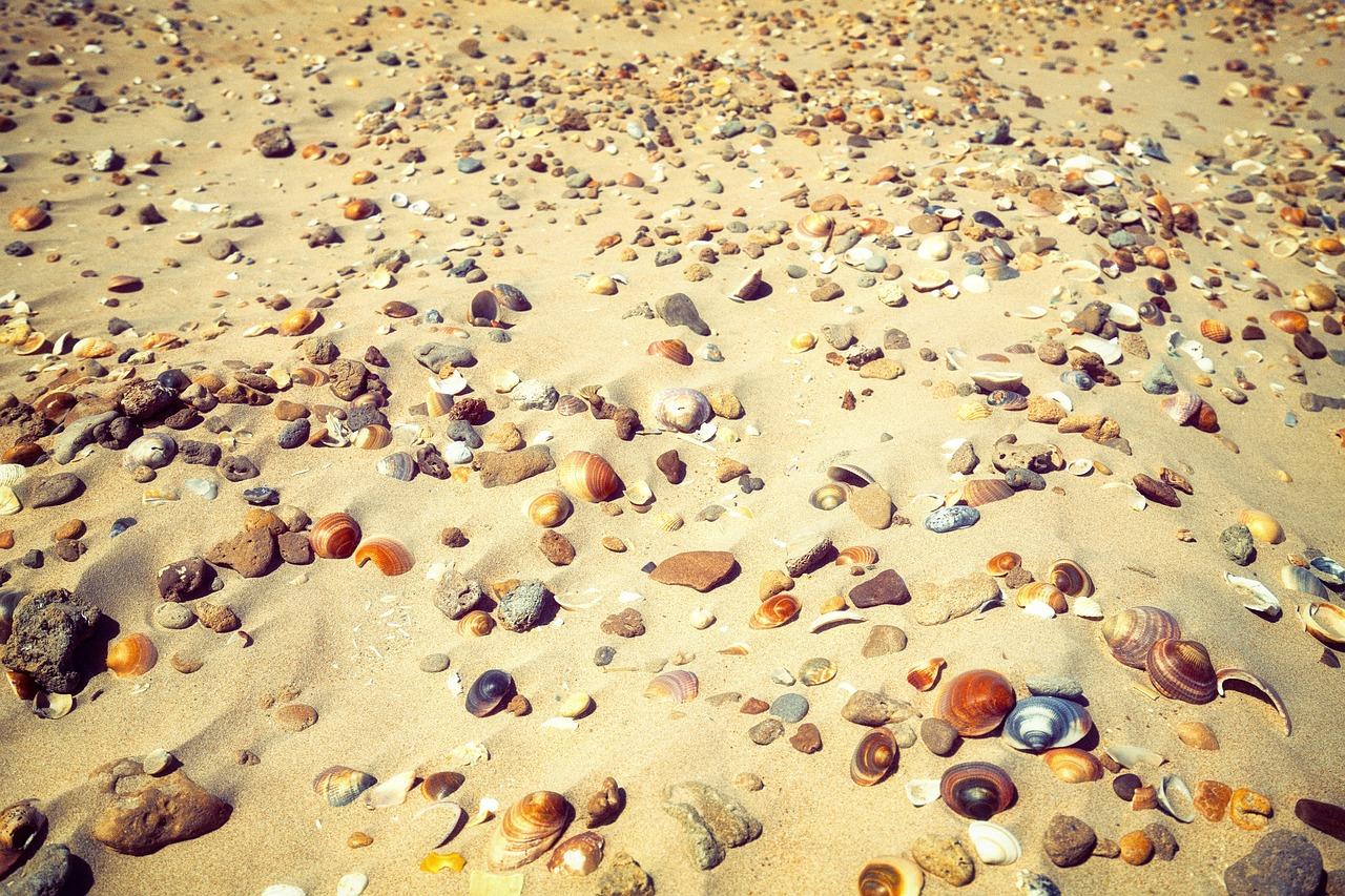 хомячках заложен песчаное дно под водой с ракушками фото военный, которого