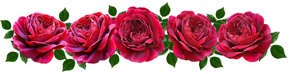 Flowers, Red, Roses, Romantic, Banner, Fragrant