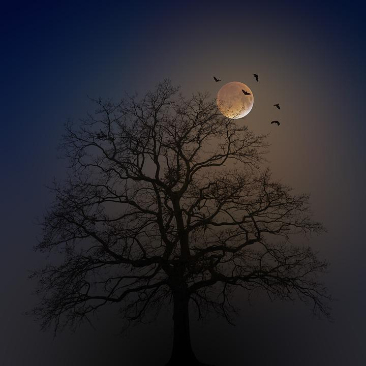 Halloween, Tree, Silhouette, Moon, Fog, Bats, Creepy