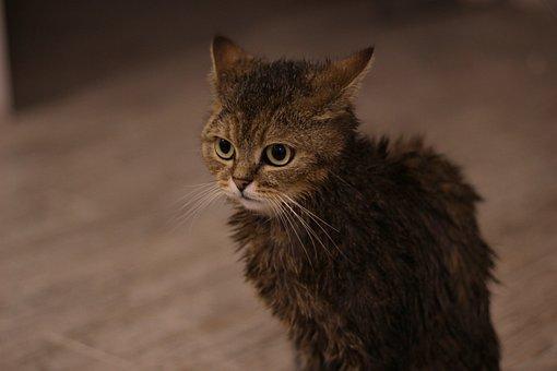 Basah, Kucing, I Love It, Mandi, Wol