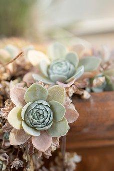 多肉植物, 植物, 自然, 庭, 植物の, 装飾用の, 落ち着いた