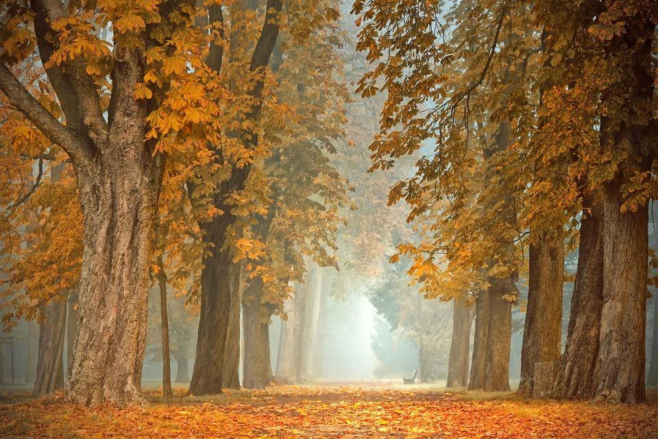 Avenue, Od, Drzew, Kasztanowiec, Upadek Kolorów