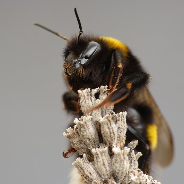 черные пчелы древесные фото спортсмены приступили