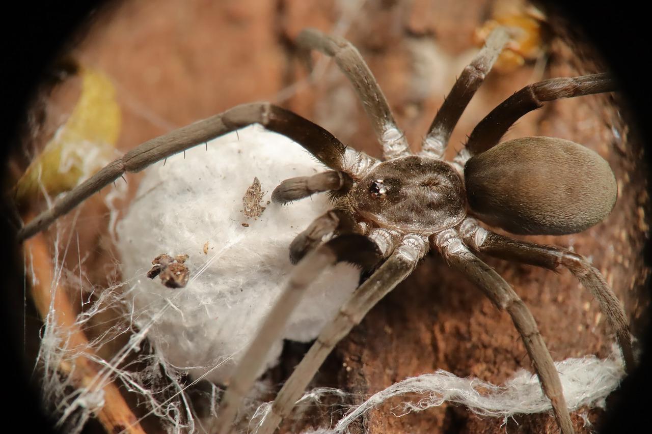 Картинки хищных пауков