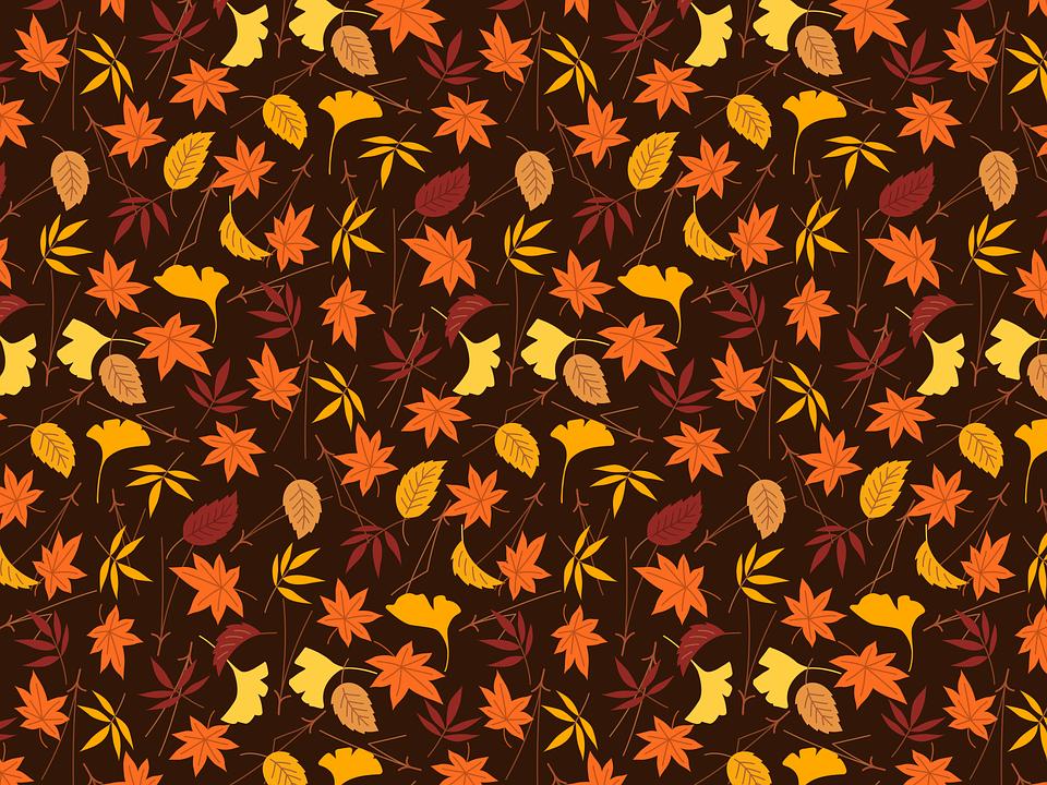 Thanksgiving, Ginko, Maple, Leaf, Leaves, Autumn
