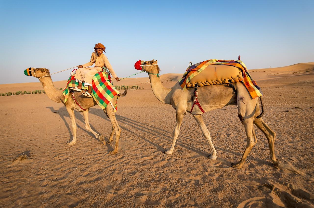 Фото с верблюдами в пустыне загадка