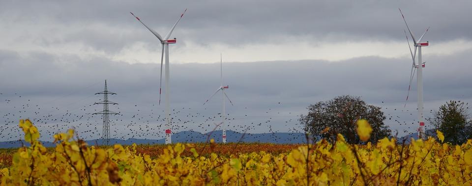 Windräder, Strommast, Weinberg, Landschaft