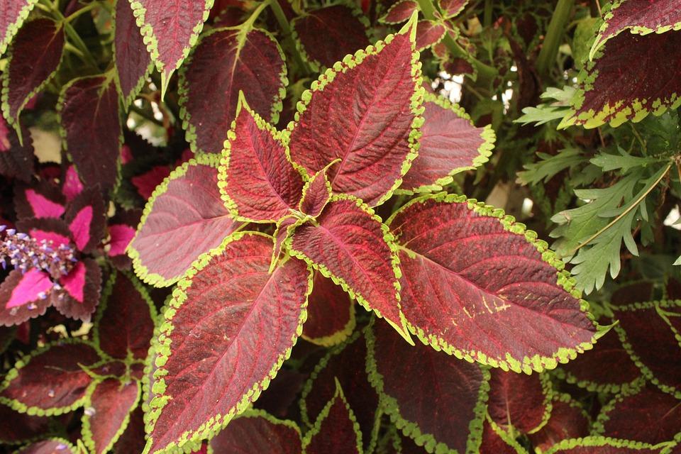 Leaves Unique Leaf Free Photo On Pixabay