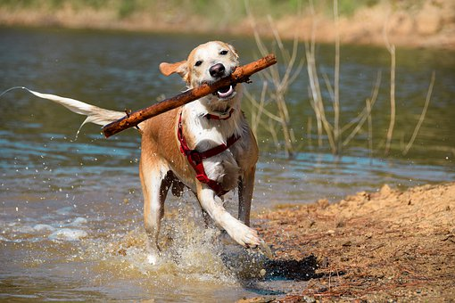 Dog, Puppy, Pet, Animal, Cute, Canine