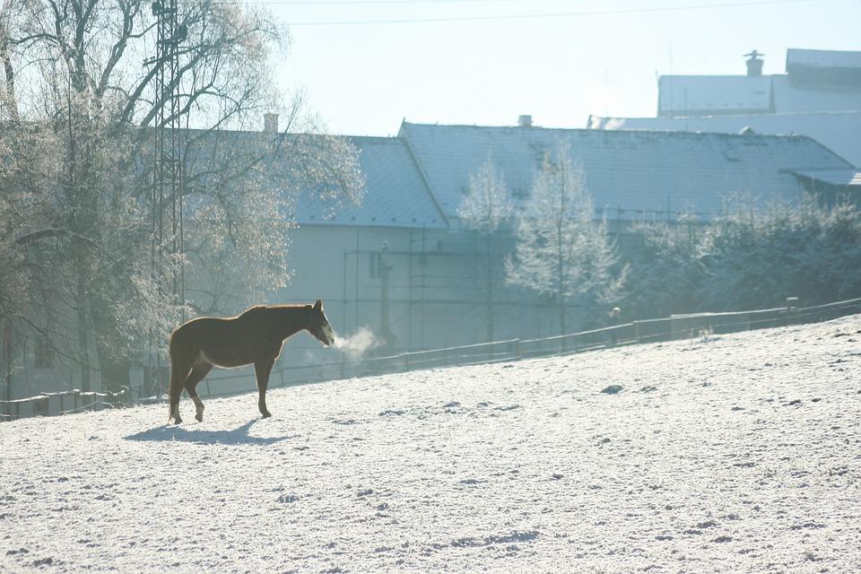 Pferd, Kalt, Atem, Wild, Eis, Stimmung