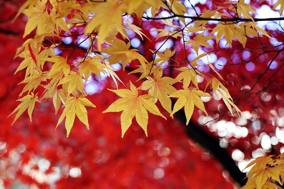 Leaves, Tree, Autumn Leaves, Autumn, The Leaves, Nature