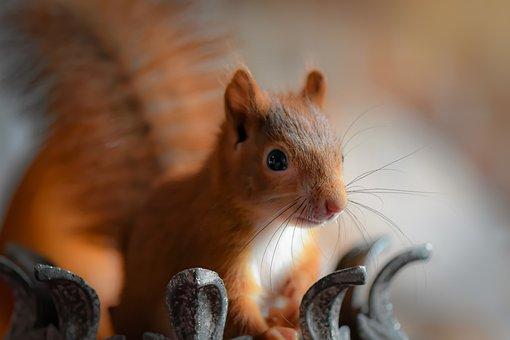 eichhörnchen bilder zum ausdrucken kostenlos