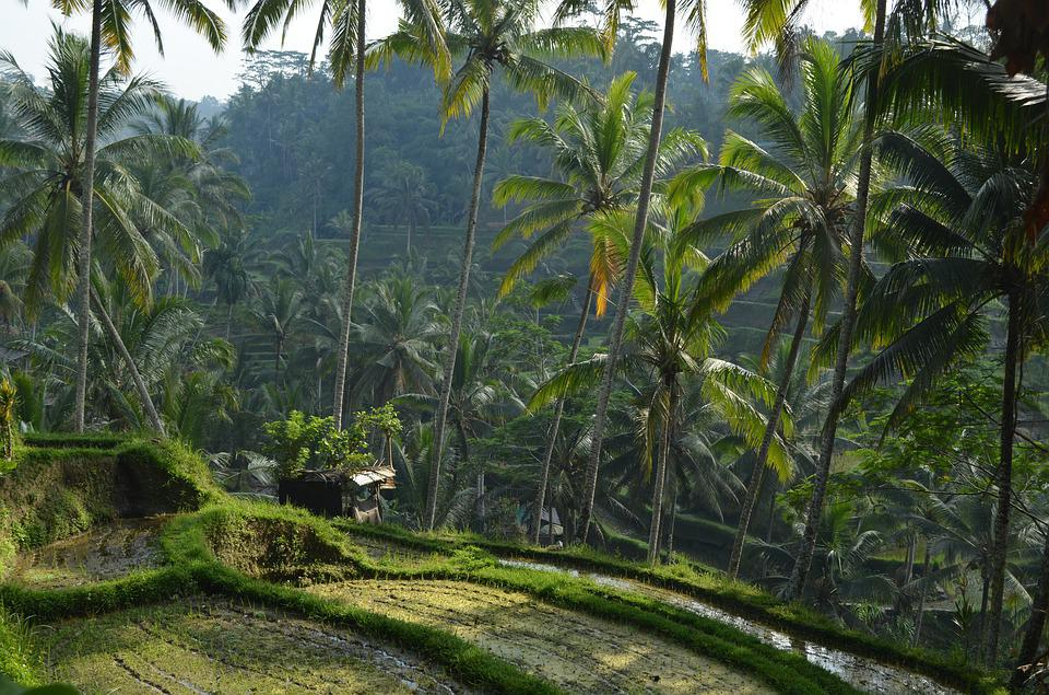 Indonésie, Bali, Voyage, Vacances, Tropical, Nature