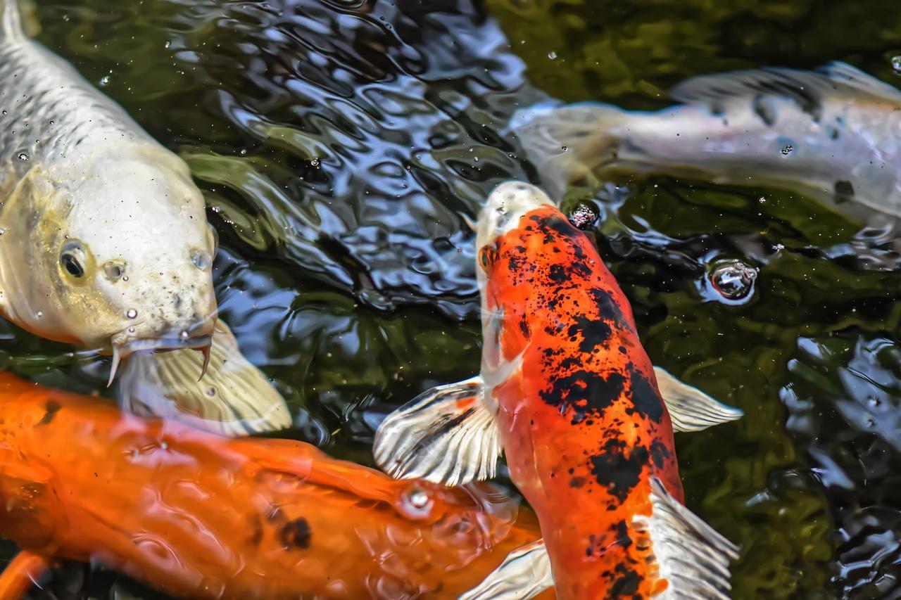 картинки рыб прудовых сейчас