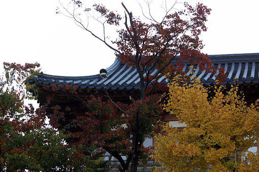 Autumn Leaves, Autumn, Roof Tile